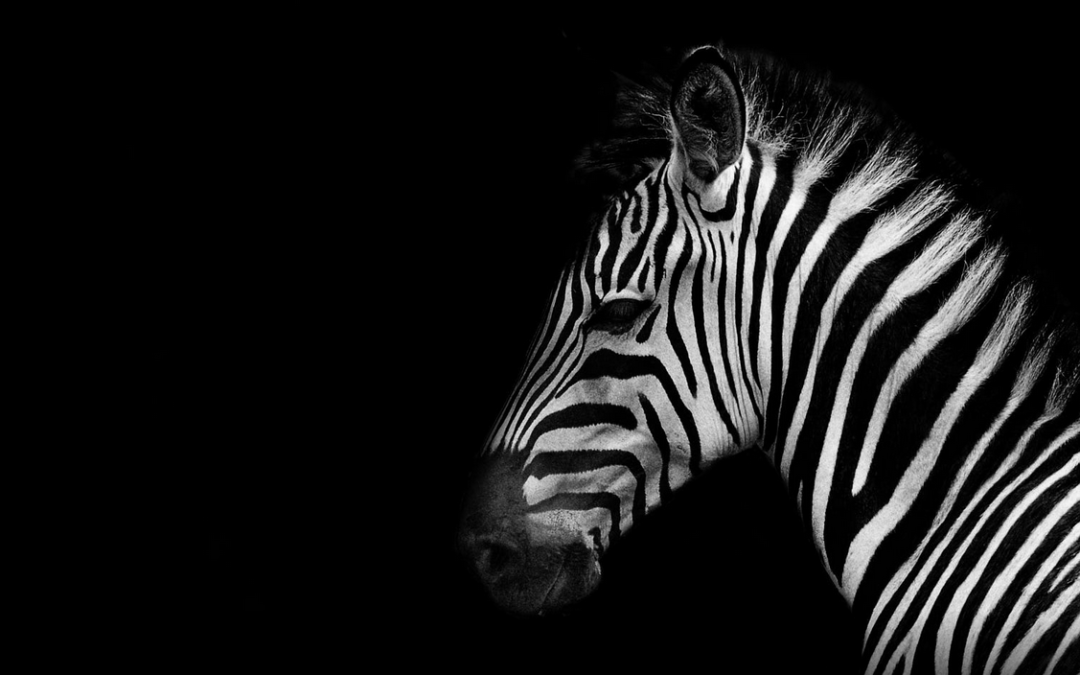 Sovereignty and the Old Testament: chapter six, THE ZEBRA